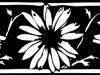 banner-daisies