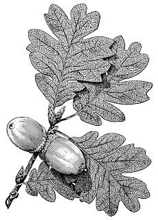 acorns-with-leaves